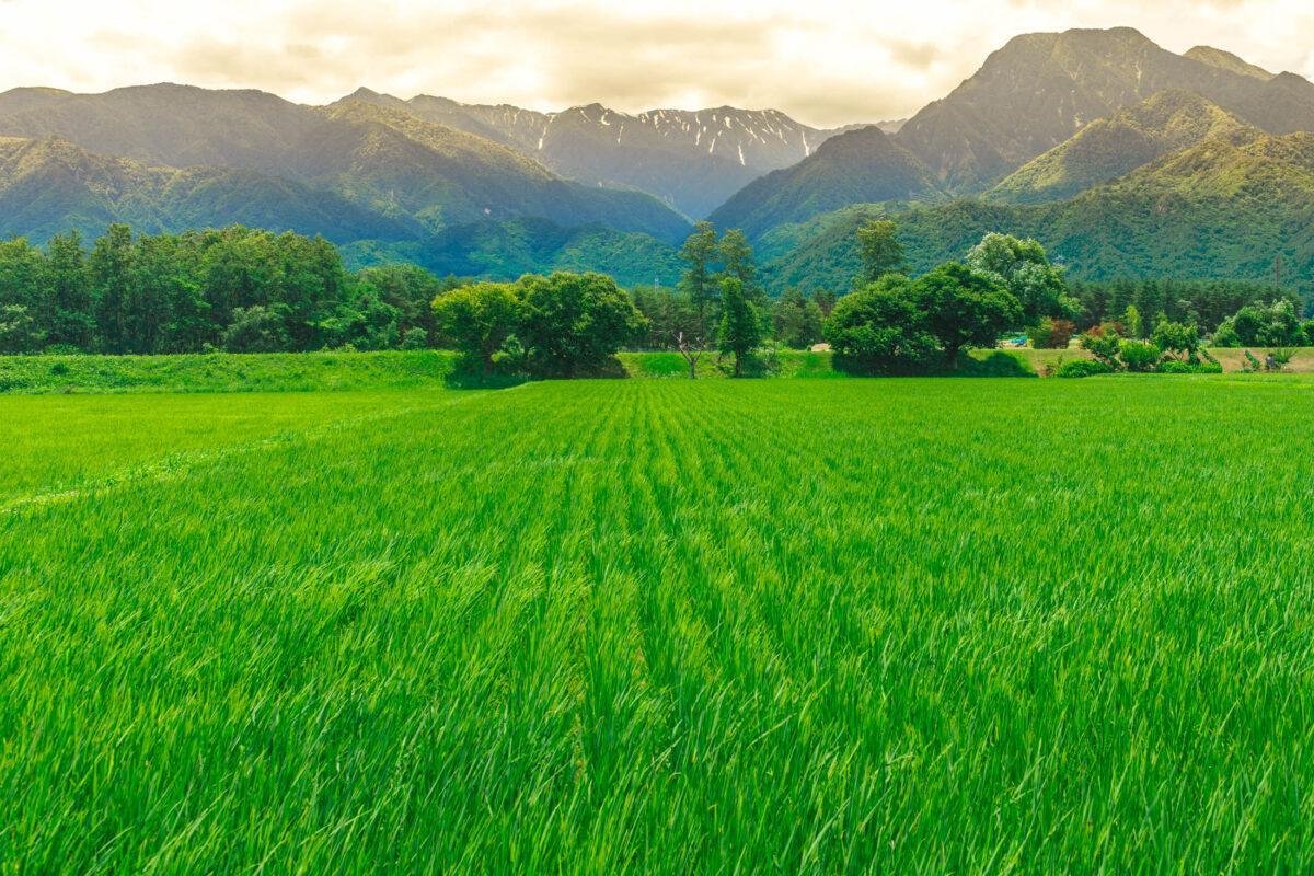 Azumino Fields