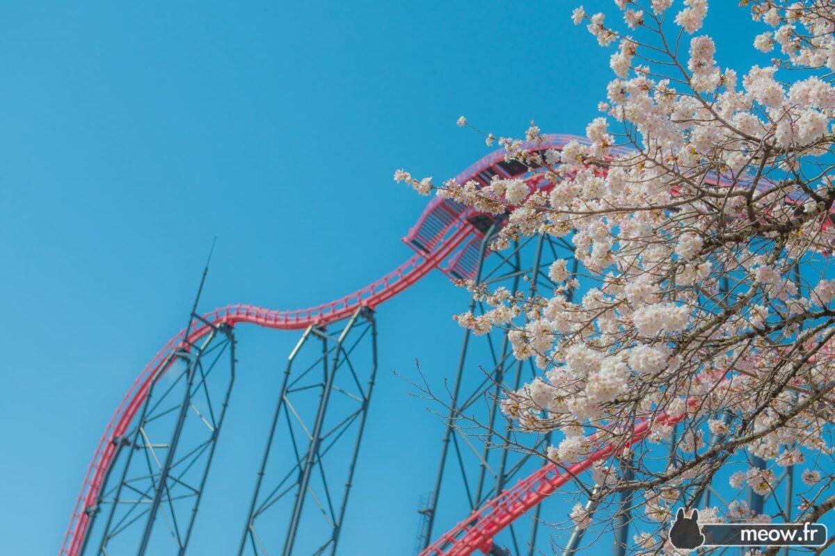 The Eejanaika Rollercoaster
