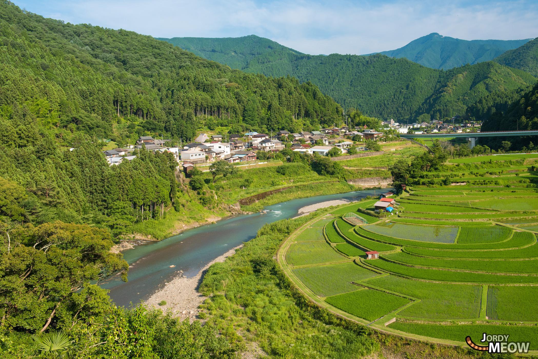 drink, food, japan, japanese, kansai, natural, nature, rice, ricefield, wakayama